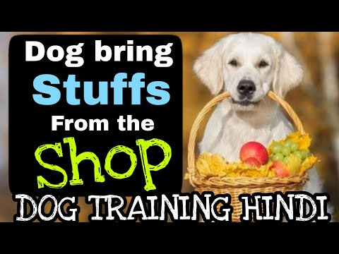 How to train your dog to bring Stuff from the Shop || Smart Dogs Training ||