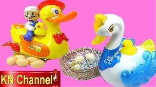 KN Channel Toys review Thiên Nga đẻ trứng | Vịt ấp trứng Lay eggs Swan Duck Toys for kids