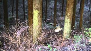 平野虎丸 水源かん養保安林 1=林業の実態