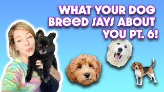 WHAT YOUR DOG BREED SAYS ABOUT YOU! Part 6: Greyhound, Laberdoodle, Irish Wolfhound, Great Pyrenees