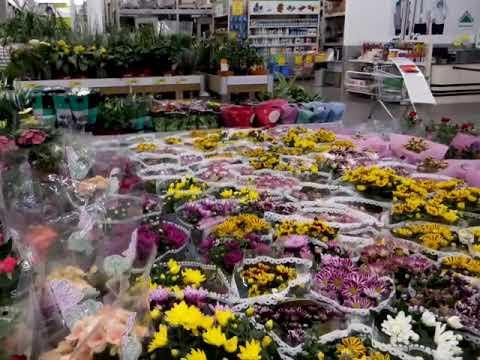 Магазин цветов в воронеж леруа мерлен, букеты живых
