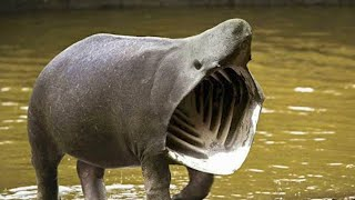 15 Most Bizarre Animals Created by Humans!