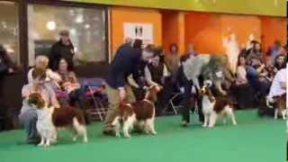 Crufts 2014 Welsh Springer Spaniel Best Dog - Part Two