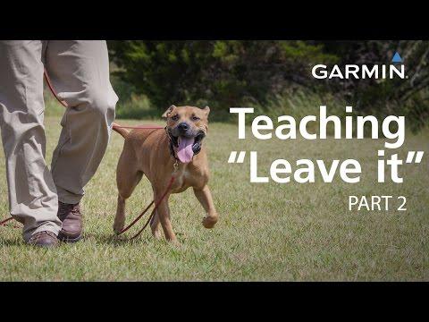 "e-Collar Training with Garmin: Teaching ""Leave it,"" Part 2"