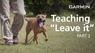 "e-Collar Training with Garmin: Teaching ""Leave it,"" Part 2"