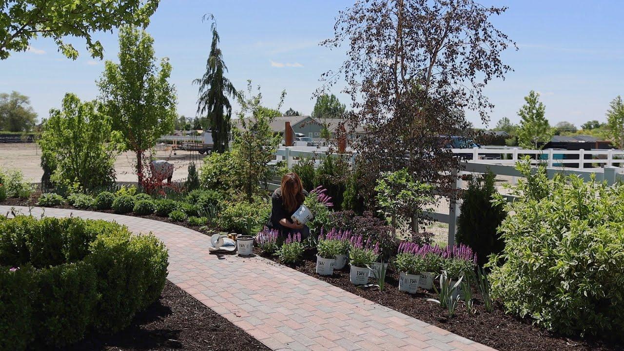Planting Salvia and a Brand New Sedum! 🌿// Garden Answer