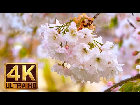 4K Flowers & Leaves - Relaxing nature sound (2 hours video)