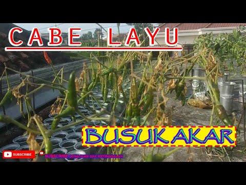 Sambal Bawang ala Bu Rudy - Peluang Usaha Modal kecil untung berlipat!из YouTube · Длительность: 7 мин56 с