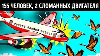 Чудо, которое спасло 155 человек, кода птицы разрушили двигатели самолета