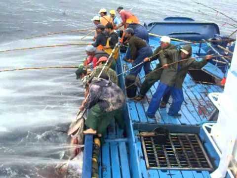 Mal amanhado pesca do atum 2011 youtube for Elias v fishing
