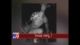 Shocking: Alien Like Creature Seen in Odisha, Kills Over 100 Sheep