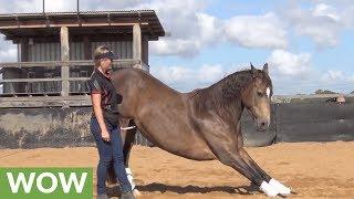 Smart horse displays array of tricks