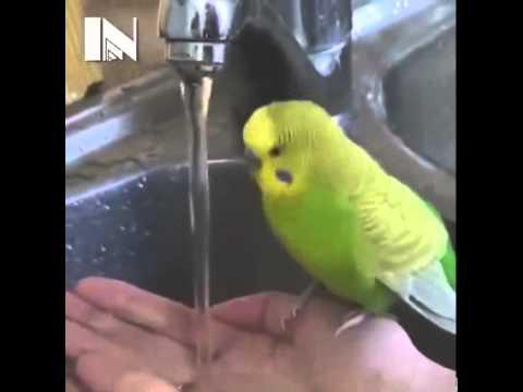Parrot Taking A Bath - Cuteness Overloaded