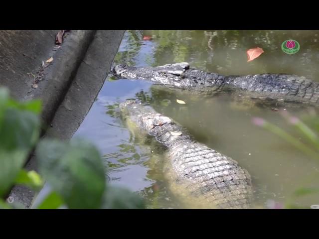 Khám phá vườn thú Đầm Sen