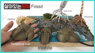 살아있는 공룡화석과 친구들(삼엽충 등..) trilobite dinosaur fossil figure review