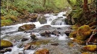 塩蔵川, 岩魚,山菜 thumbnail