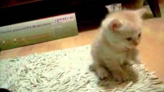 Кошка и маленькие котята