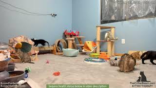 Olympian Kittens - Mama On Alert