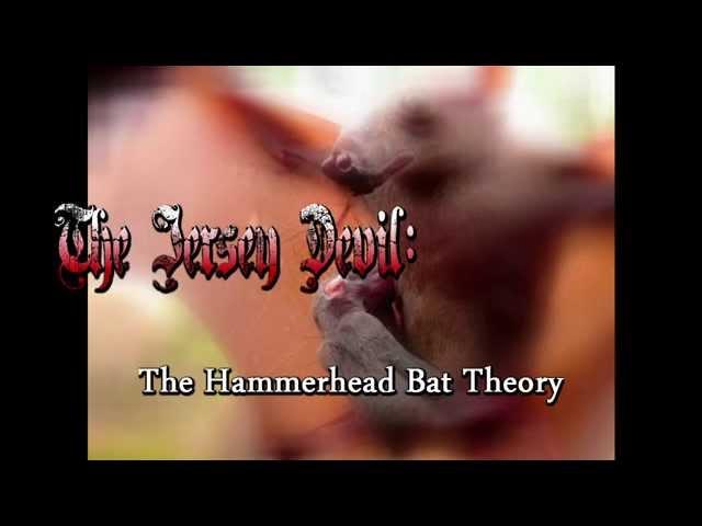 The Jersey Devil: Hammerhead Bat Theory (Axis Video)