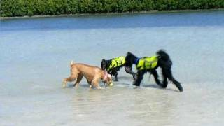 Poodle Beach Party 04-26-09
