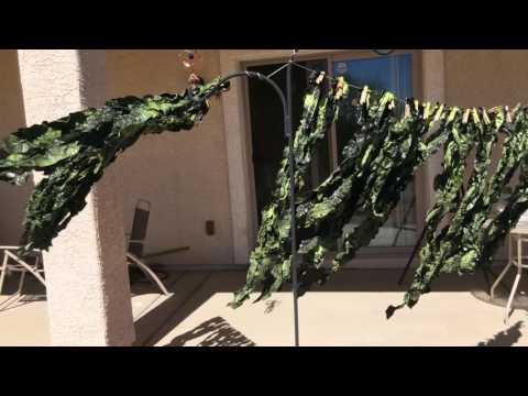 Trash Bag Seaweed