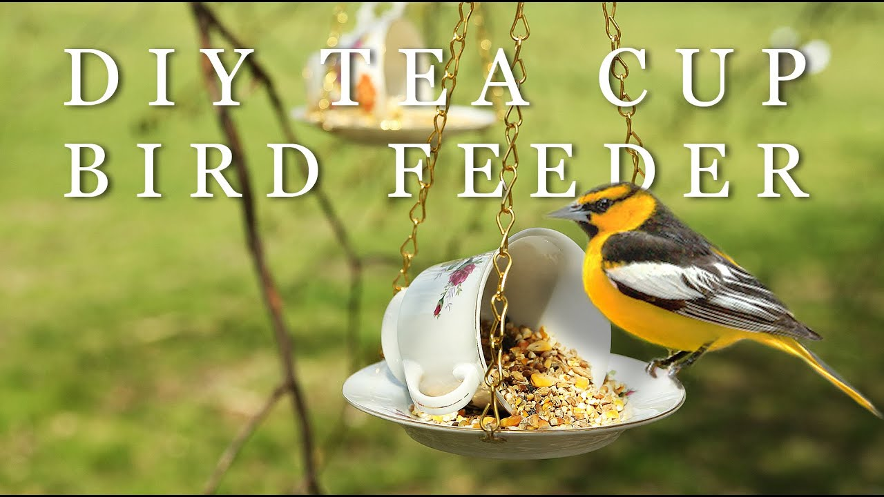 diy mother s day gift tea cup bird feeder youtube