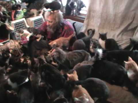 "Polydactyl cats-""Ships Cat""-Family meal-social bonding"