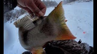ПОПАЛ ОКУНИ КАБАНЧИКИ НЕ ДАЮТ ОПУСТИТЬ ДО ДНА Рыбалка 2020 балансир fishing perch