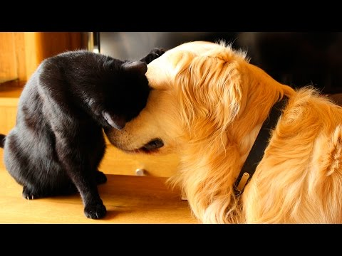 cute cats and dogs playing with each other together funnydog tv. Black Bedroom Furniture Sets. Home Design Ideas