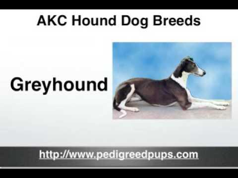 AKC Hound Dog Breeds - AKC Hound Dogs
