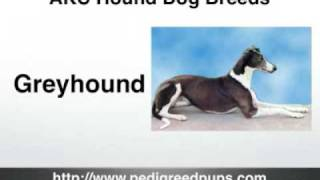 http://www.pedigreedpups.com This short video shares information ab...