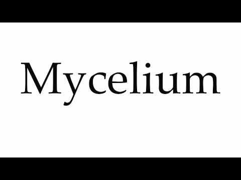 How to Pronounce Mycelium
