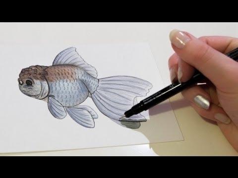 ✎-blue-oranda- -solid-gold-sketchbook