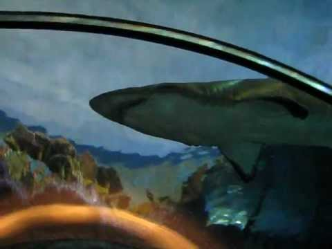Blue Shark Diving & Mako Shark Snorkeling | SDEXPEDITIONS