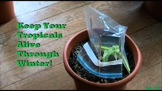 Simple Tip to Keep Tropical Plants Alive Through Winter