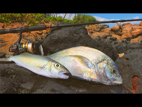 Catching & Cooking Hawaiian Reef Fish (Tasty Tacos)