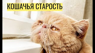 Кошачья старость — что нужно знать об уходе за стареющими кошками