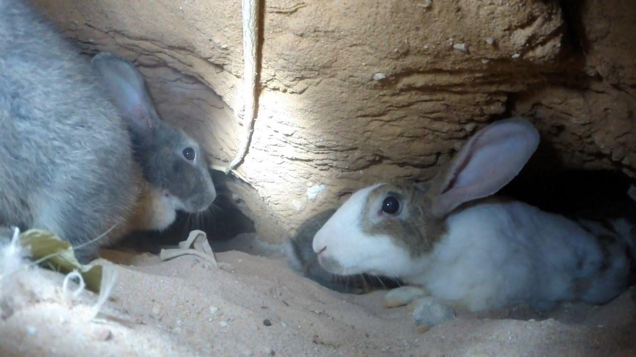 An adventure inside a rabbit's warren HD  GoPro  YouTube
