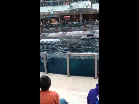 West Edmonton mall Marine Life Experience