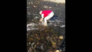 Balık böyle tutulur  (elle balık yakalamak)