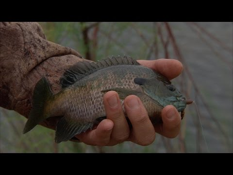 Trophy Bluegill fishing on Doc Hollis Lake in SW Oklahoma (Sandy Sanders WMA)