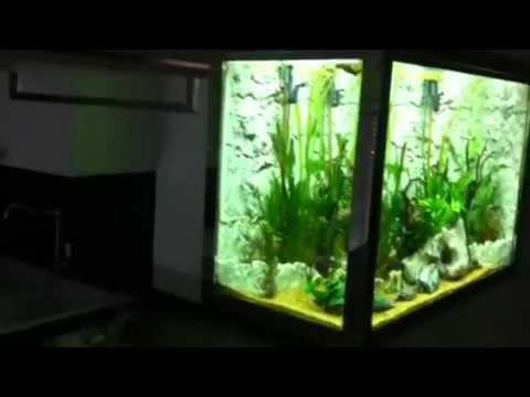 Acquario 600 litri 100 neon aquaproject andria youtube for Acquario 100 litri prezzo