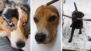 Funny DOGS of TikTok ~ Cute Puppies ~ Best Doggos of TIK TOK ~ Dog Squad