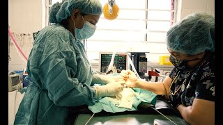 Amherst Vet Hospital Promotional Film