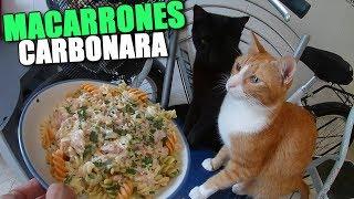 HAGO MACARRONES CARBONARA
