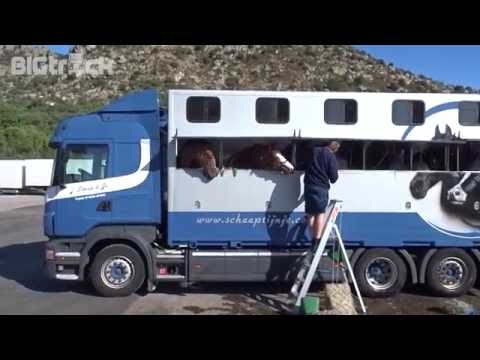 Horse transport to Marocco