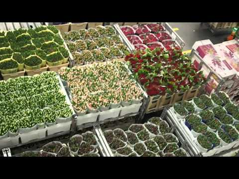 Largest flower auction in the world: Flora Holland, Aalsmeer - 3