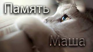 В память о нашей кошке Маши. #Fm76