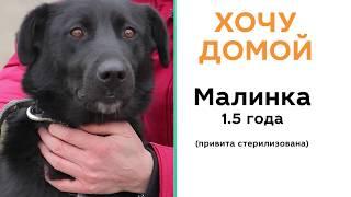 Хочу домой. Бездомные животные ищут хозяина. История собаки Малинки.