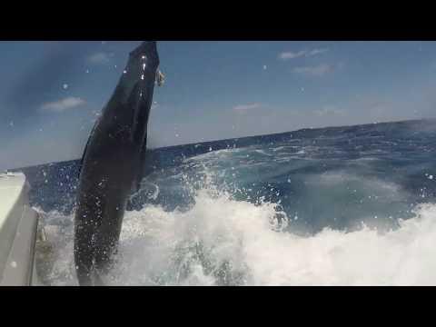 2017/2018 Peak Sportfishing Blue Marlin Season